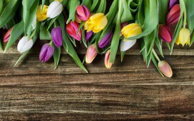 Spring Has Sprung! A Spring Break Video Playlist