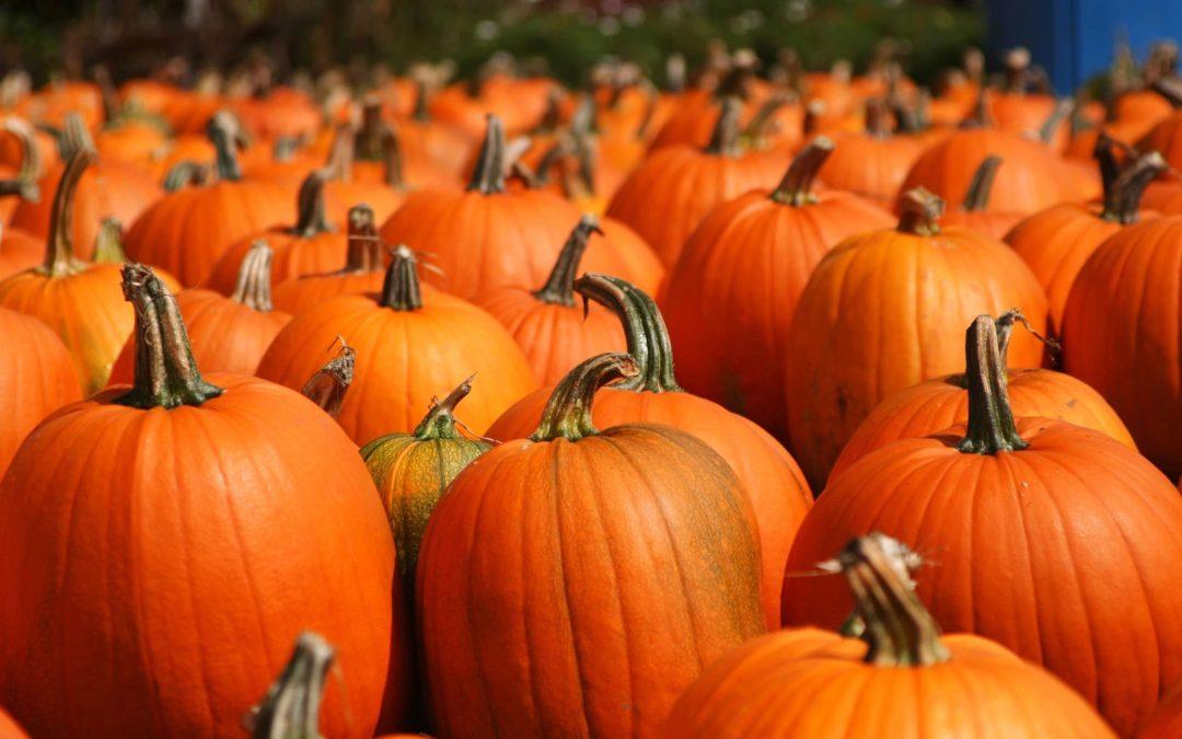 October & Pumpkins!