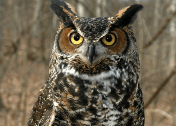 4 Little Owls + 1 Last Chance to Join In On The Fun….