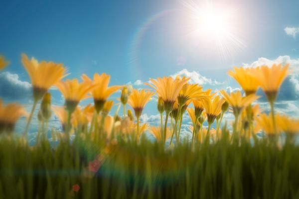 Sun & Sunshine Songs
